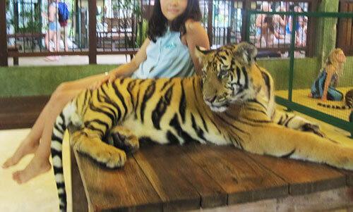 タイガーキングダムではトラに触れる